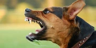 angry-dog-thumbnail2